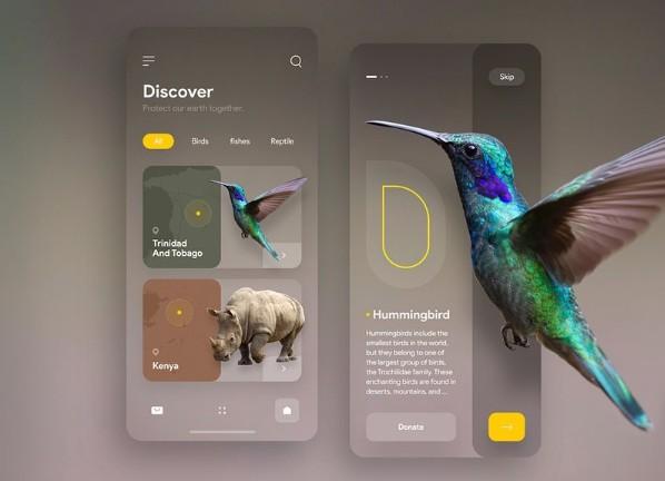 Animal conservation app from design to Flutter